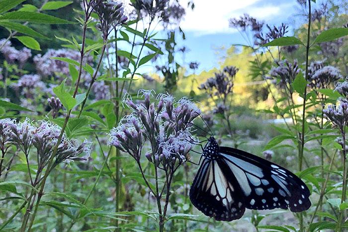 春と秋に訪れる、旅する蝶「アサギマダラ」|大分のエリア情報|別大興産